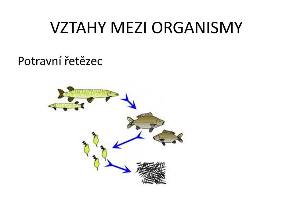 VZTAHY MEZI ORGANISMY Potravní řetězec