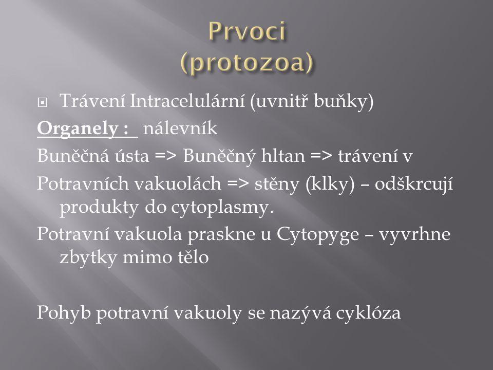 Prvoci (protozoa) Trávení Intracelulární (uvnitř buňky)