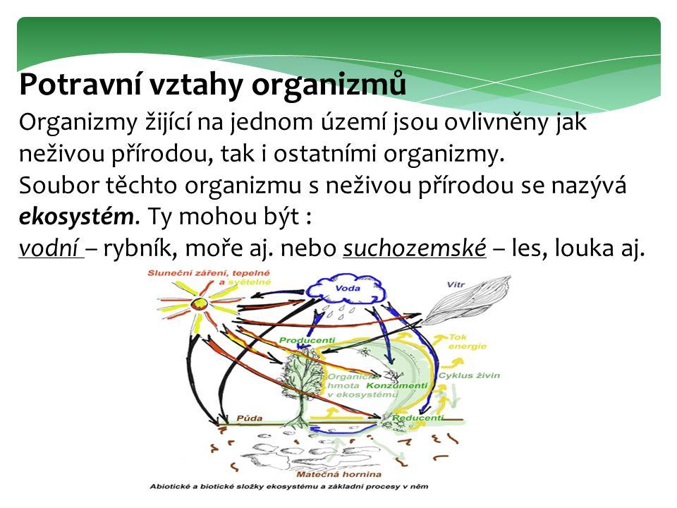 Potravní vztahy organizmů