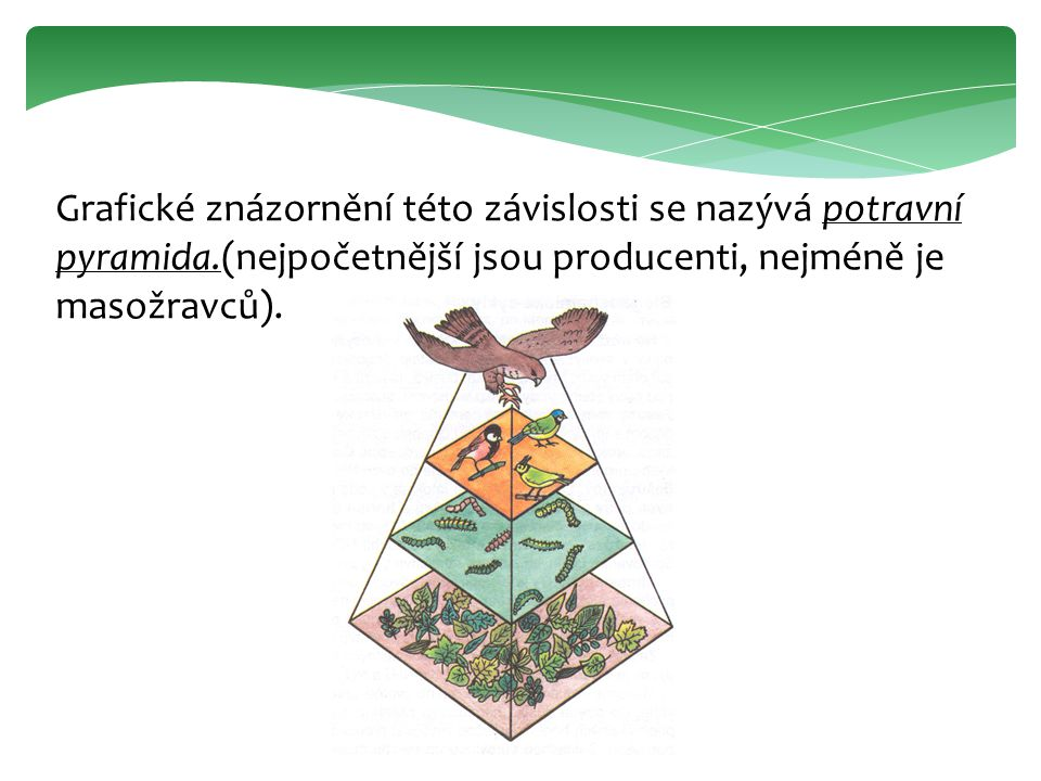 Grafické znázornění této závislosti se nazývá potravní pyramida