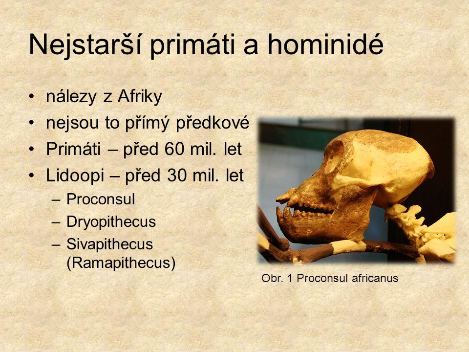 Nejstarší primáti a hominidé