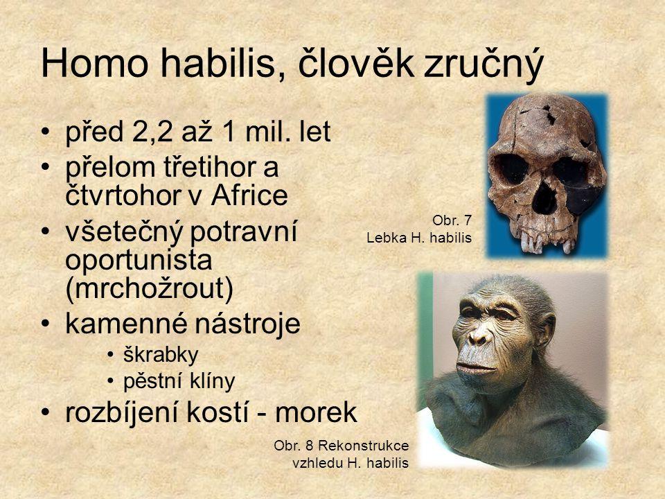 Homo habilis, člověk zručný