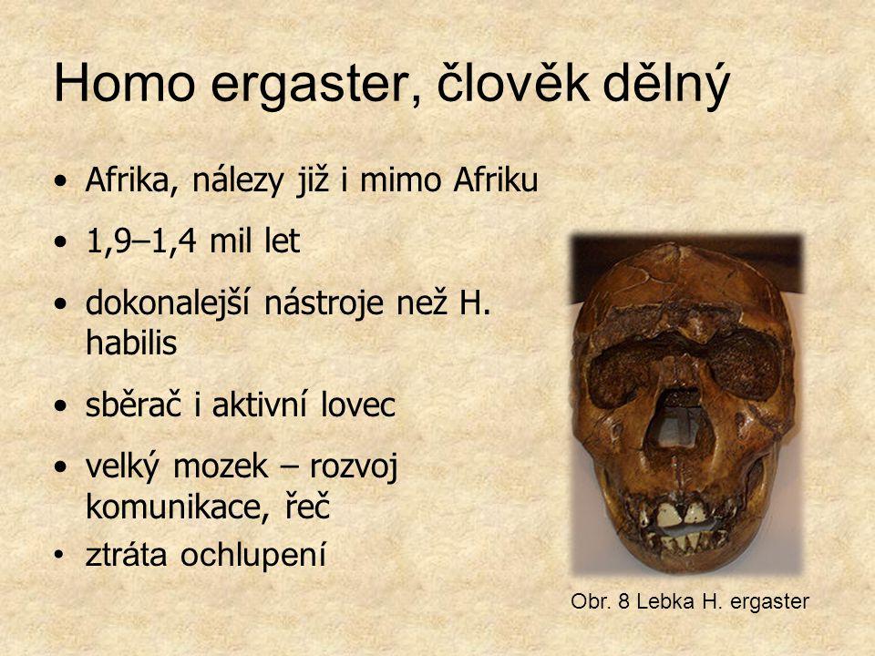 Homo ergaster, člověk dělný