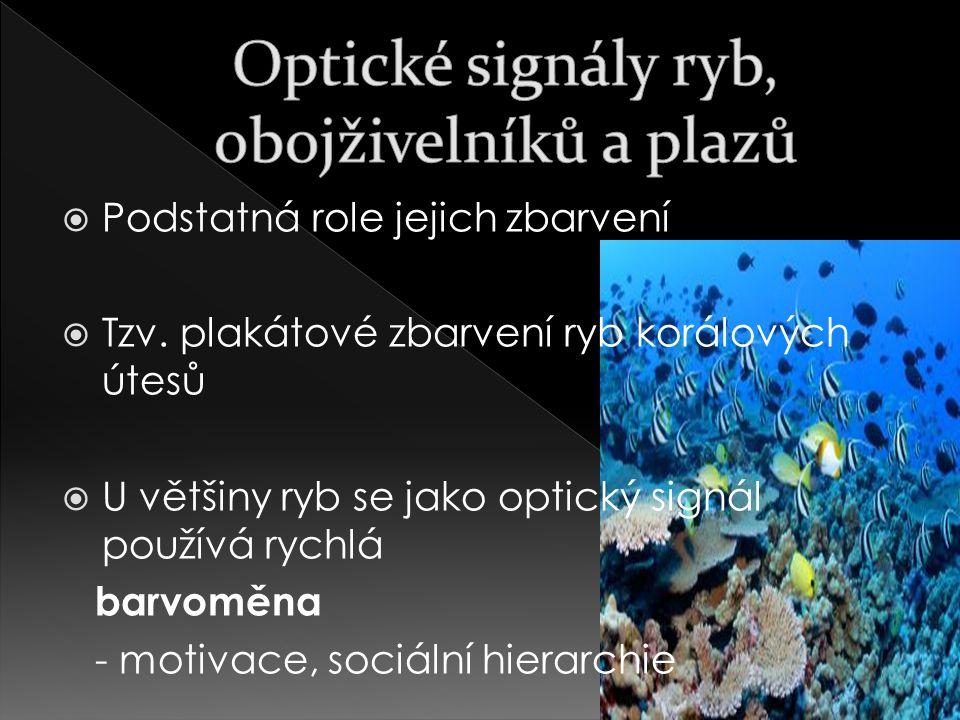 Optické signály ryb, obojživelníků a plazů