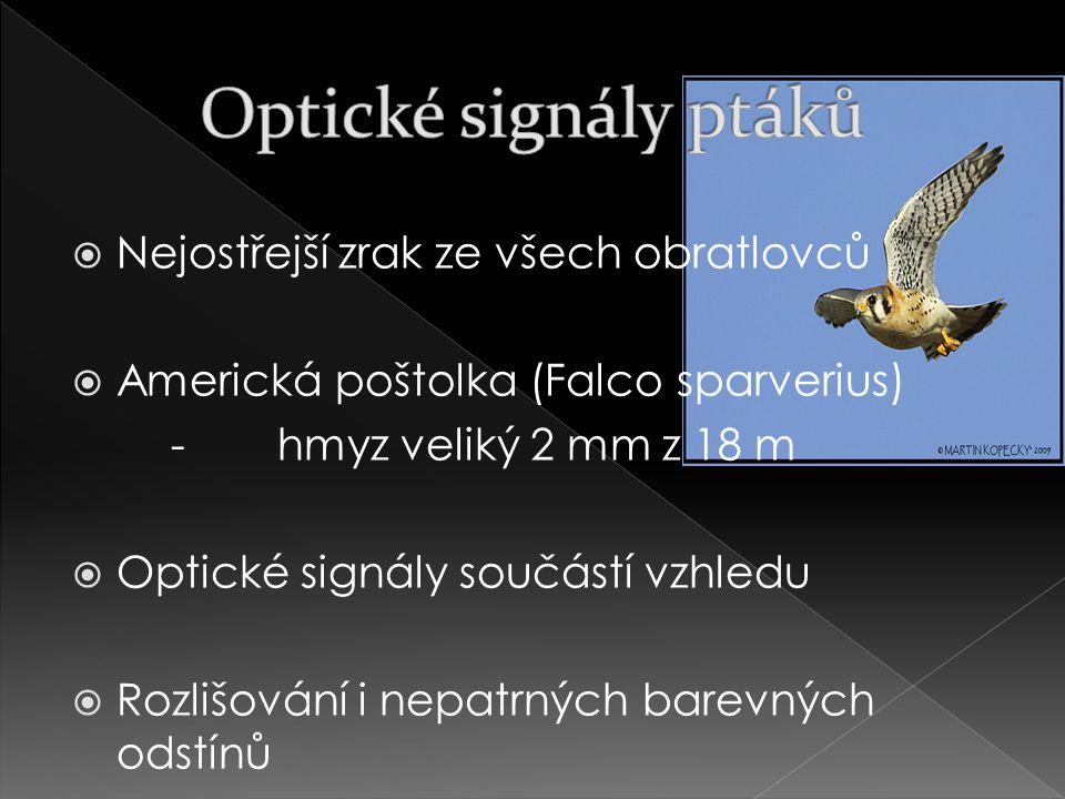 Optické signály ptáků Nejostřejší zrak ze všech obratlovců