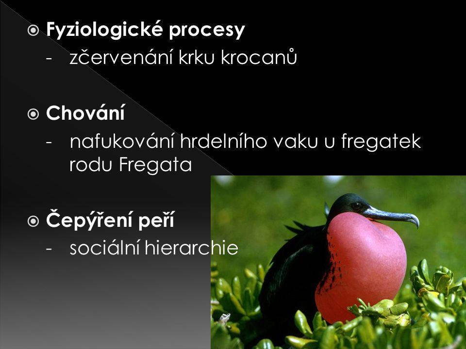 Fyziologické procesy - zčervenání krku krocanů. Chování. - nafukování hrdelního vaku u fregatek rodu Fregata.