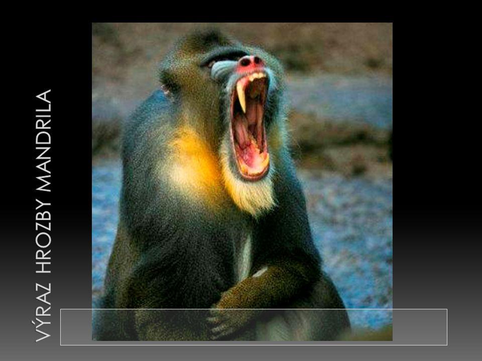 Výraz hrozby mandrila