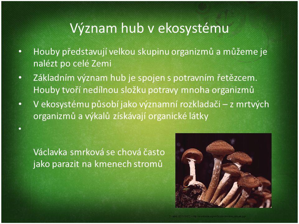 Význam hub v ekosystému