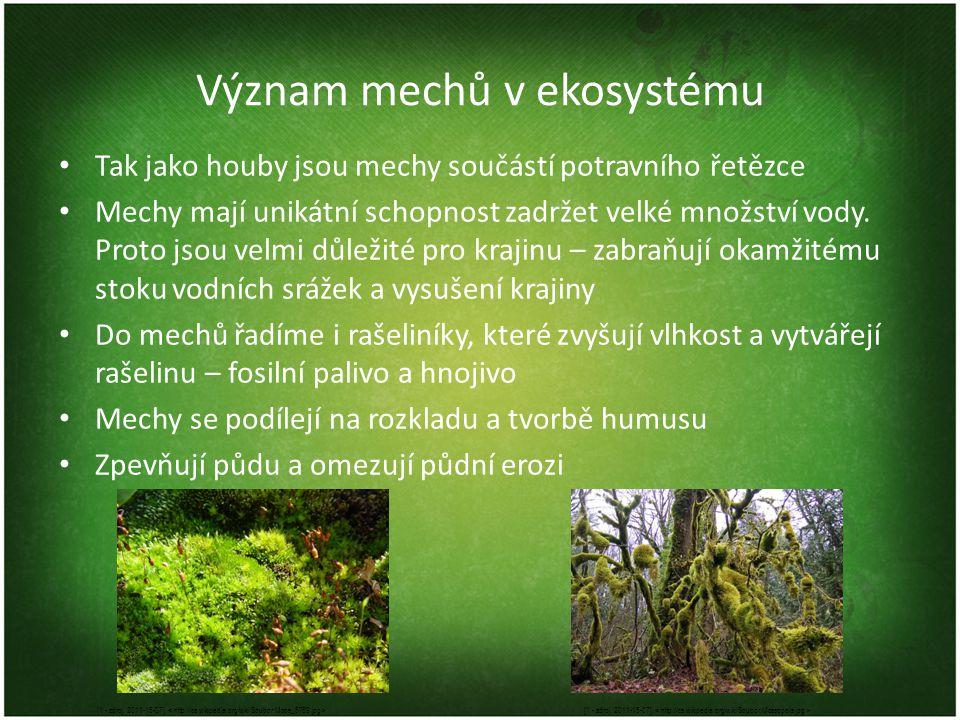 Význam mechů v ekosystému