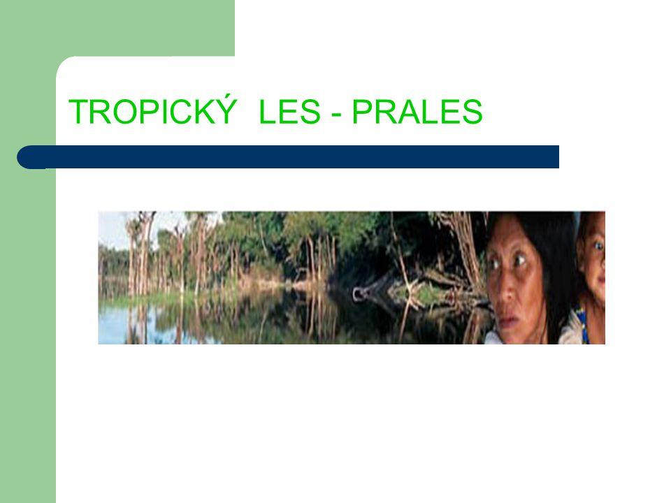 TROPICKÝ LES - PRALES