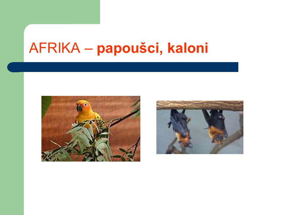 AFRIKA – papoušci, kaloni