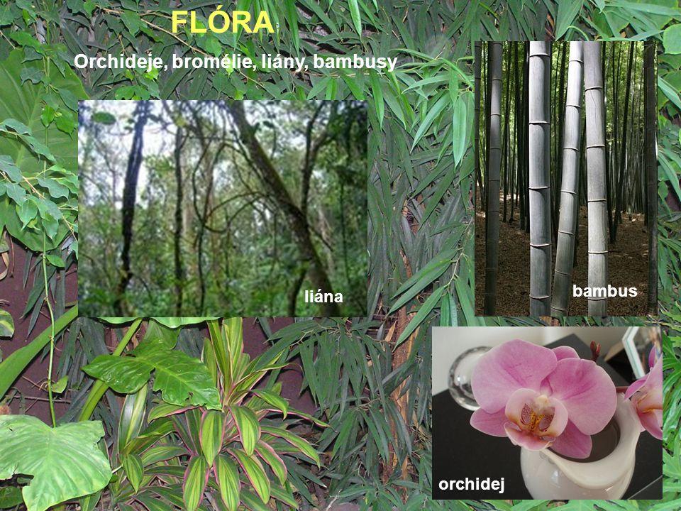 FLÓRA Orchideje, bromélie, liány, bambusy bambus liána orchidej