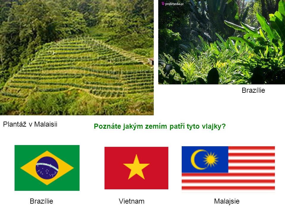 Brazílie Plantáž v Malaisii. Poznáte jakým zemím patří tyto vlajky