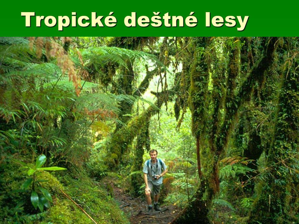 Tropické deštné lesy