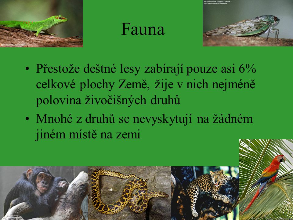 Fauna Přestože deštné lesy zabírají pouze asi 6% celkové plochy Země, žije v nich nejméně polovina živočišných druhů.