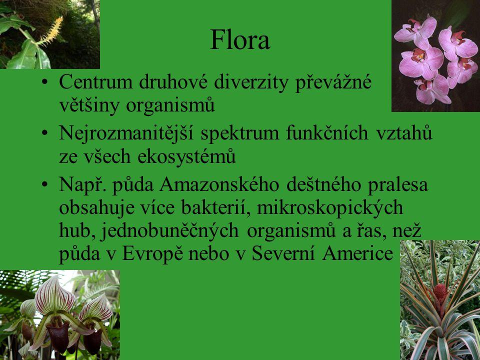 Flora Centrum druhové diverzity převážné většiny organismů