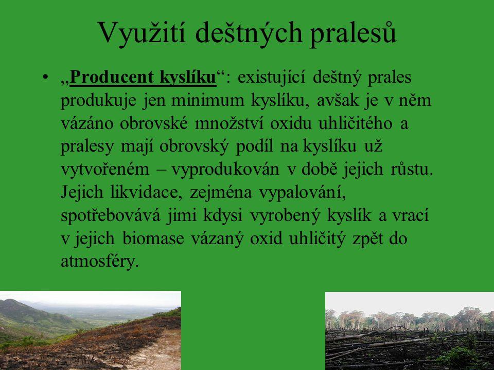 Využití deštných pralesů