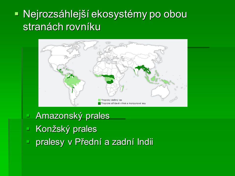Nejrozsáhlejší ekosystémy po obou stranách rovníku