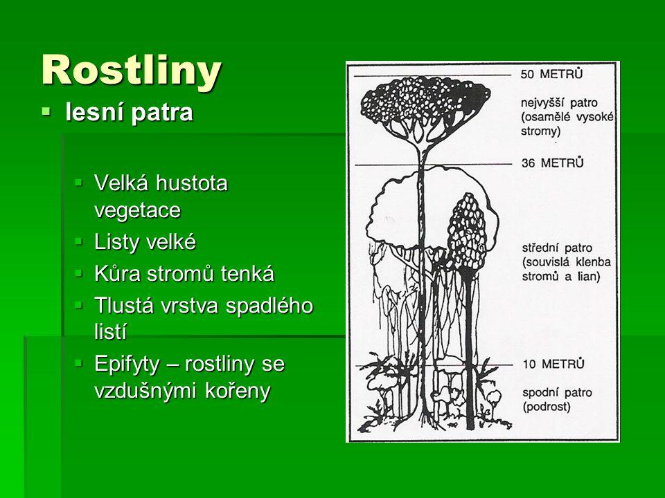 Rostliny lesní patra Velká hustota vegetace Listy velké