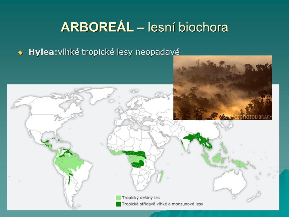 ARBOREÁL – lesní biochora