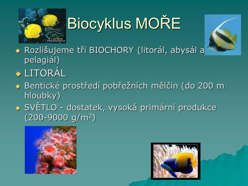 Biocyklus MOŘE LITORÁL