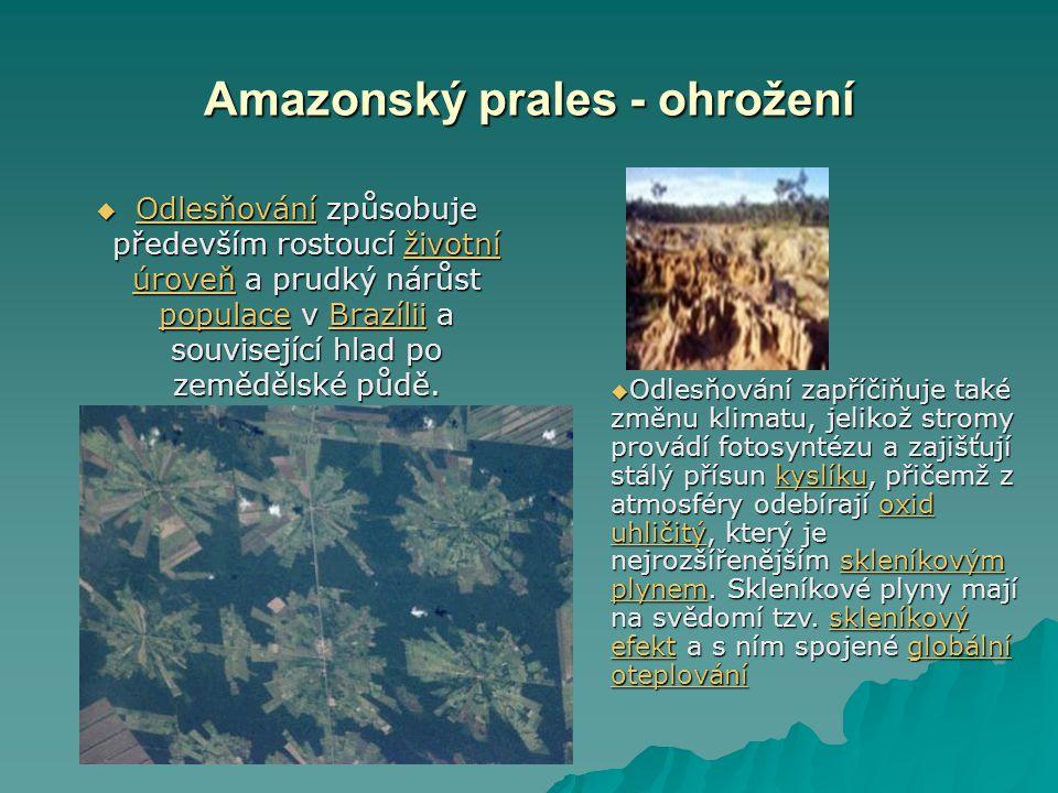 Amazonský prales - ohrožení