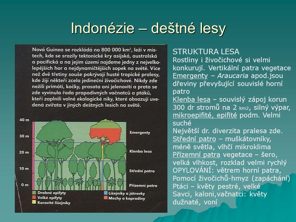 Indonézie – deštné lesy