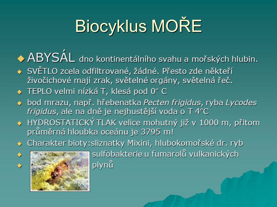 Biocyklus MOŘE ABYSÁL dno kontinentálního svahu a mořských hlubin.