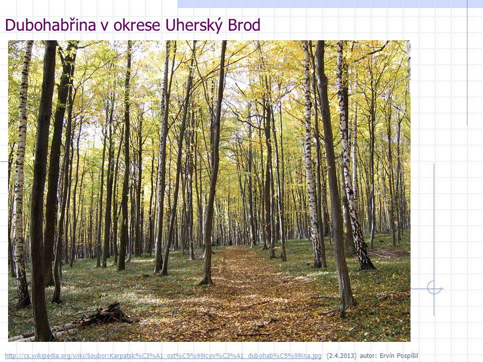 Dubohabřina v okrese Uherský Brod