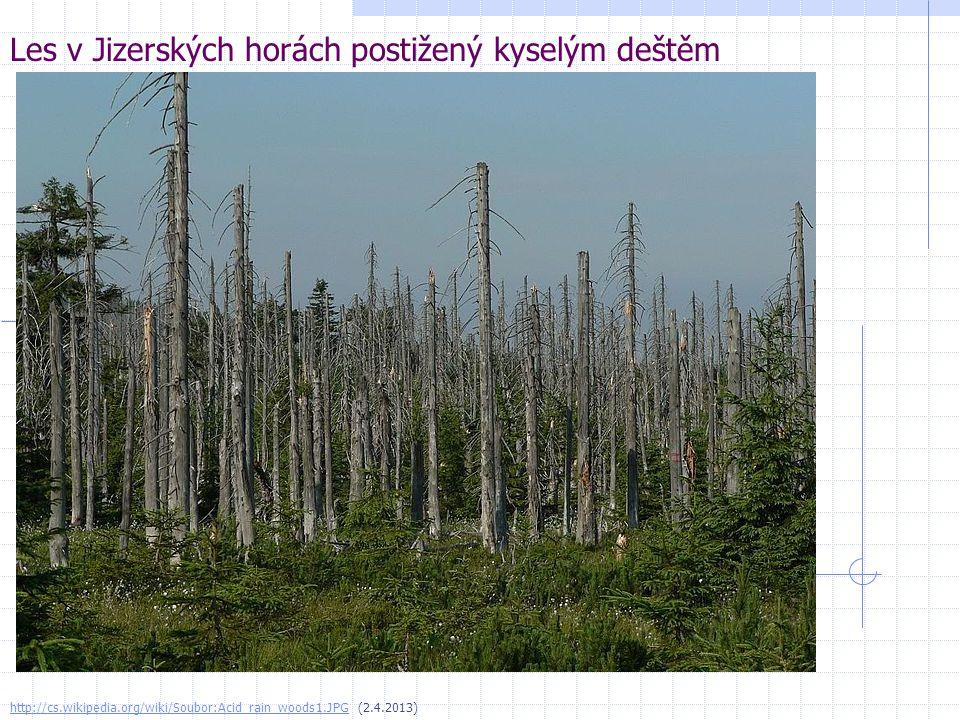 Les v Jizerských horách postižený kyselým deštěm