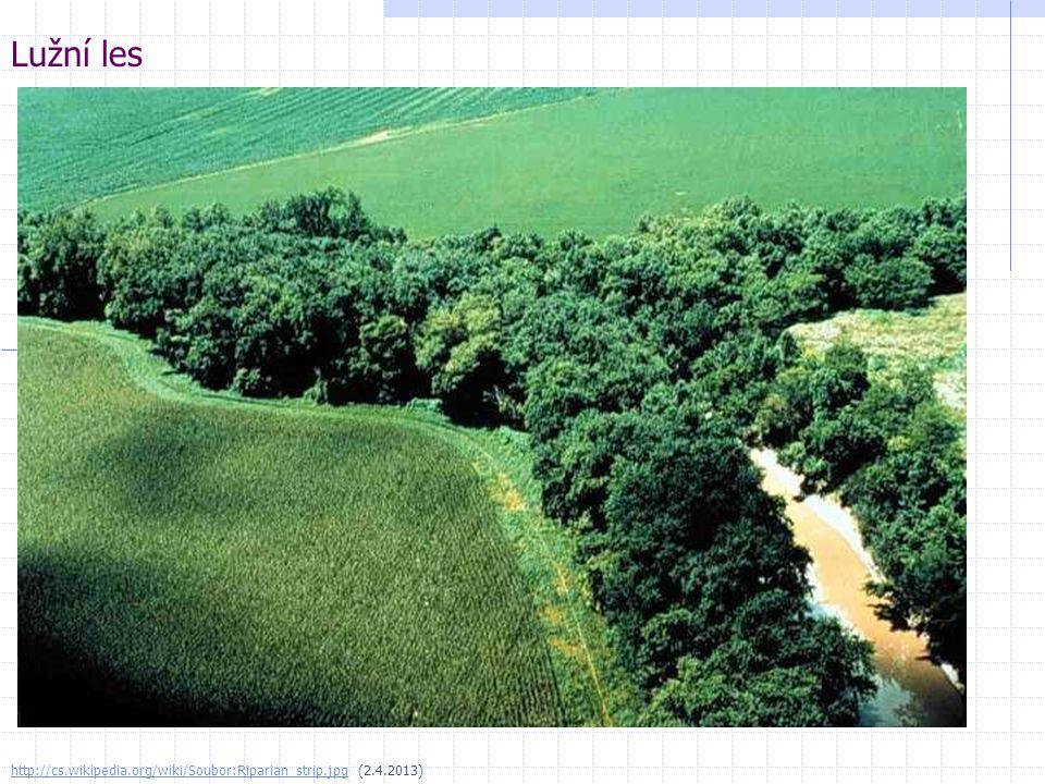 Lužní les http://cs.wikipedia.org/wiki/Soubor:Riparian_strip.jpg (2.4.2013)