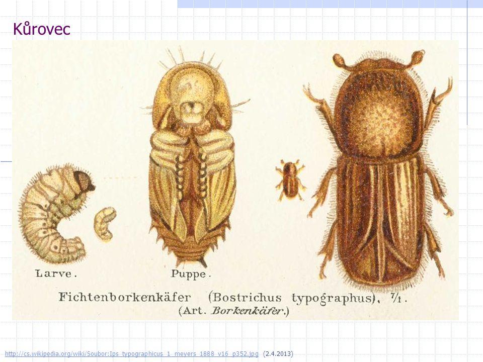 Kůrovec http://cs.wikipedia.org/wiki/Soubor:Ips_typographicus_1_meyers_1888_v16_p352.jpg (2.4.2013)