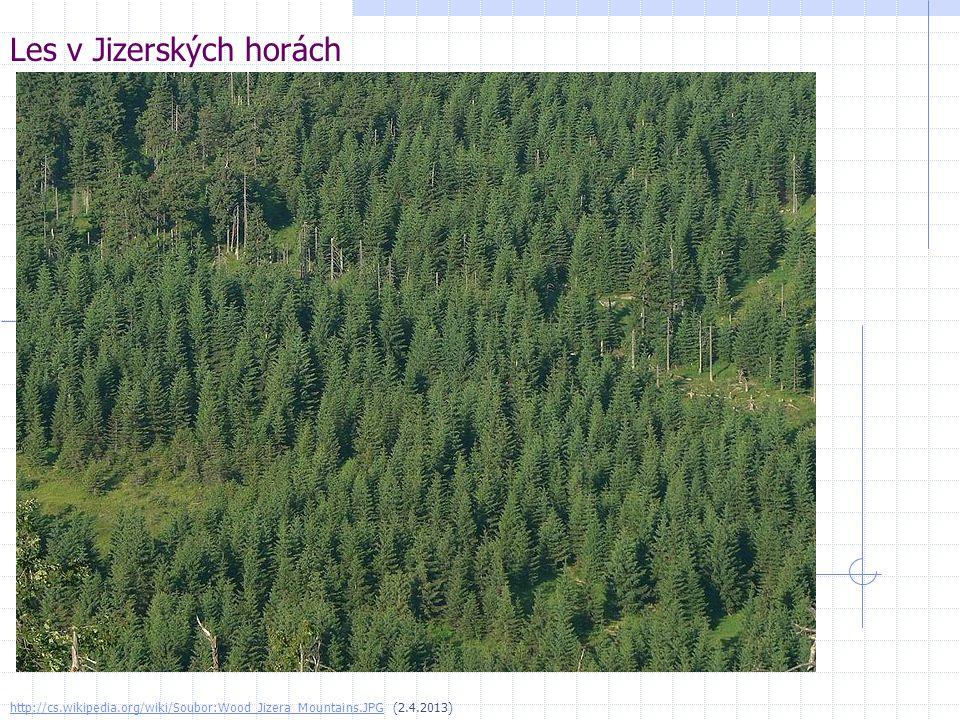 Les v Jizerských horách