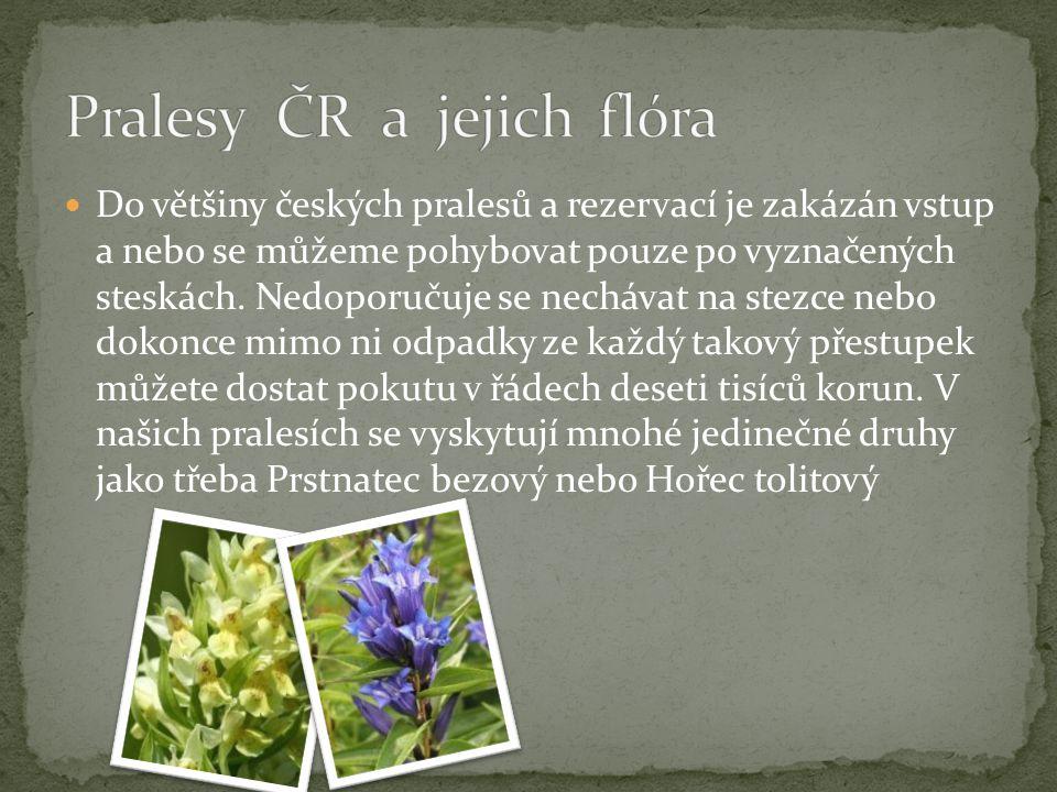 Pralesy ČR a jejich flóra