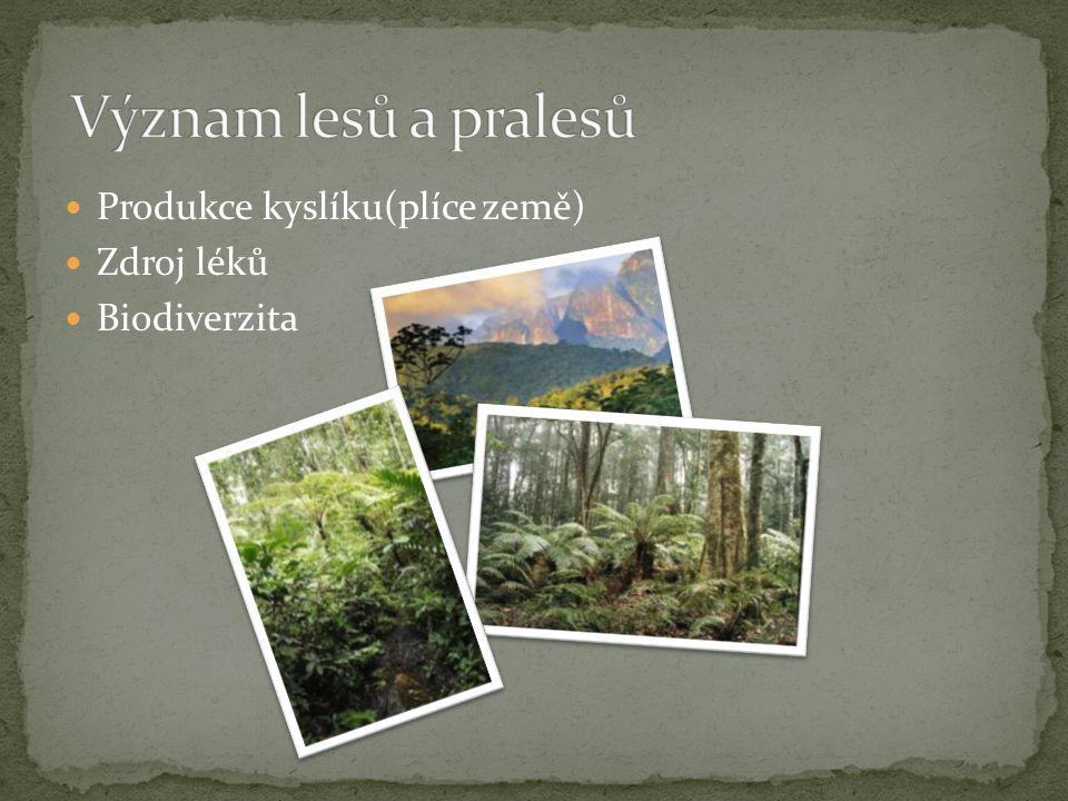Význam lesů a pralesů Produkce kyslíku(plíce země) Zdroj léků