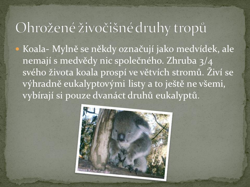 Ohrožené živočišné druhy tropů