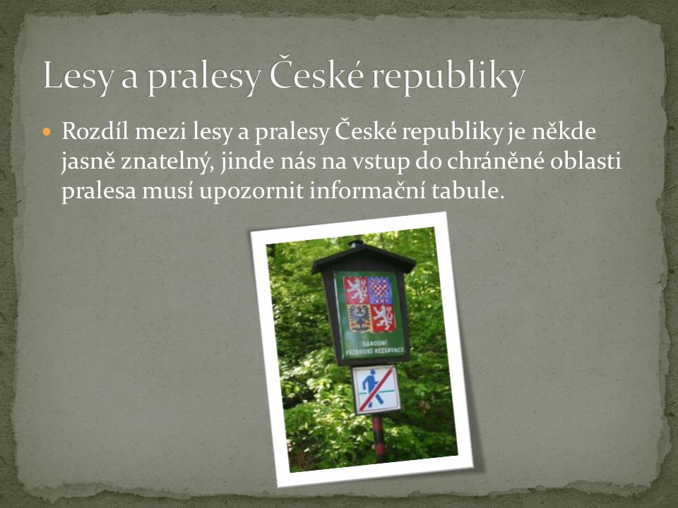 Lesy a pralesy České republiky