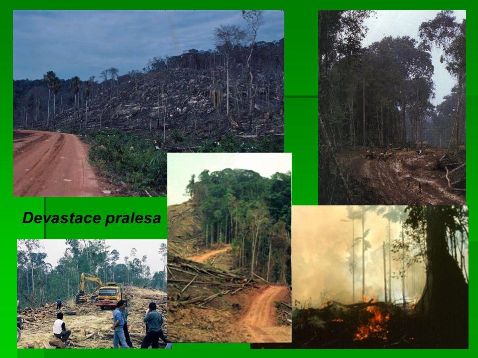 Devastace pralesa