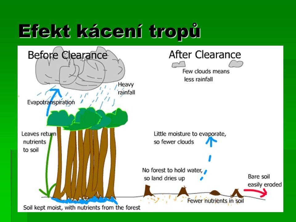Efekt kácení tropů