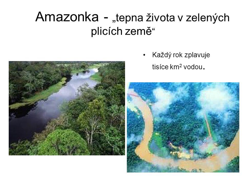 """Amazonka - """"tepna života v zelených plicích země"""