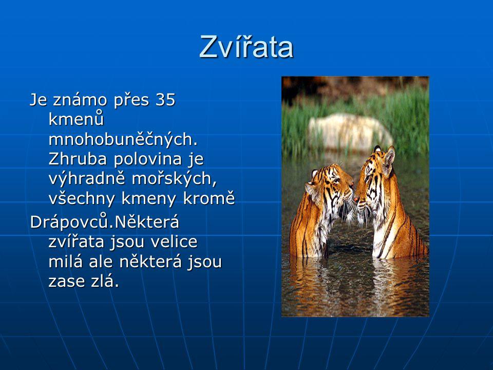 Zvířata Je známo přes 35 kmenů mnohobuněčných. Zhruba polovina je výhradně mořských, všechny kmeny kromě.