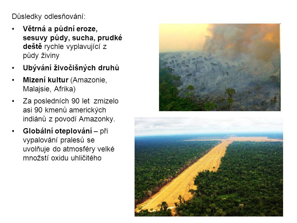 Důsledky odlesňování: