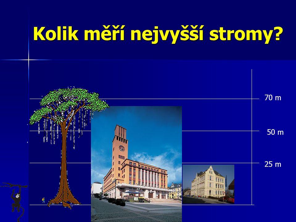 Kolik měří nejvyšší stromy