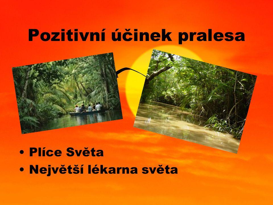 Pozitivní účinek pralesa