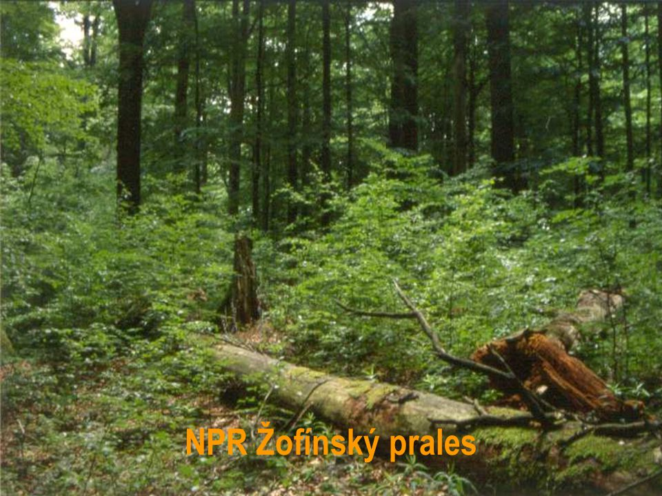 NPR Žofínský prales