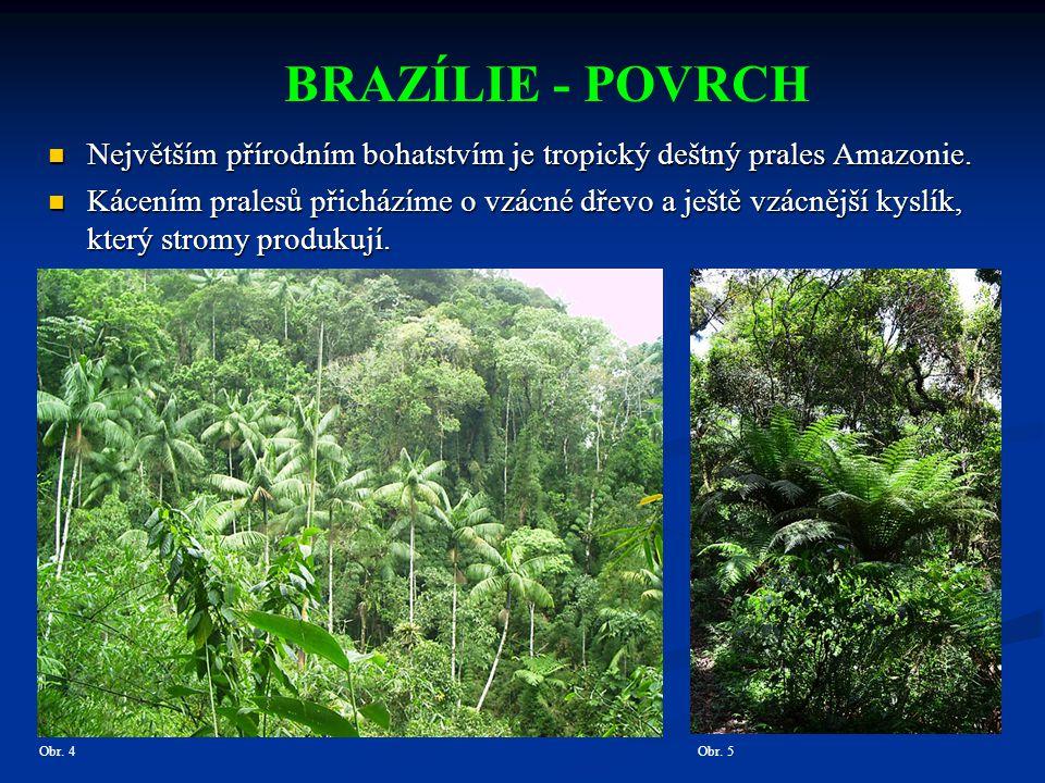 BRAZÍLIE - POVRCH Největším přírodním bohatstvím je tropický deštný prales Amazonie.
