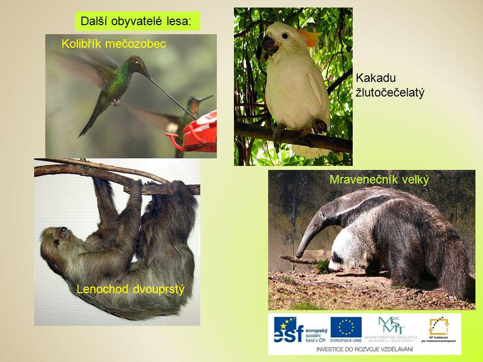 Další obyvatelé lesa: Kolibřík mečozobec Kakadu žlutočečelatý Mravenečník velký Lenochod dvouprstý