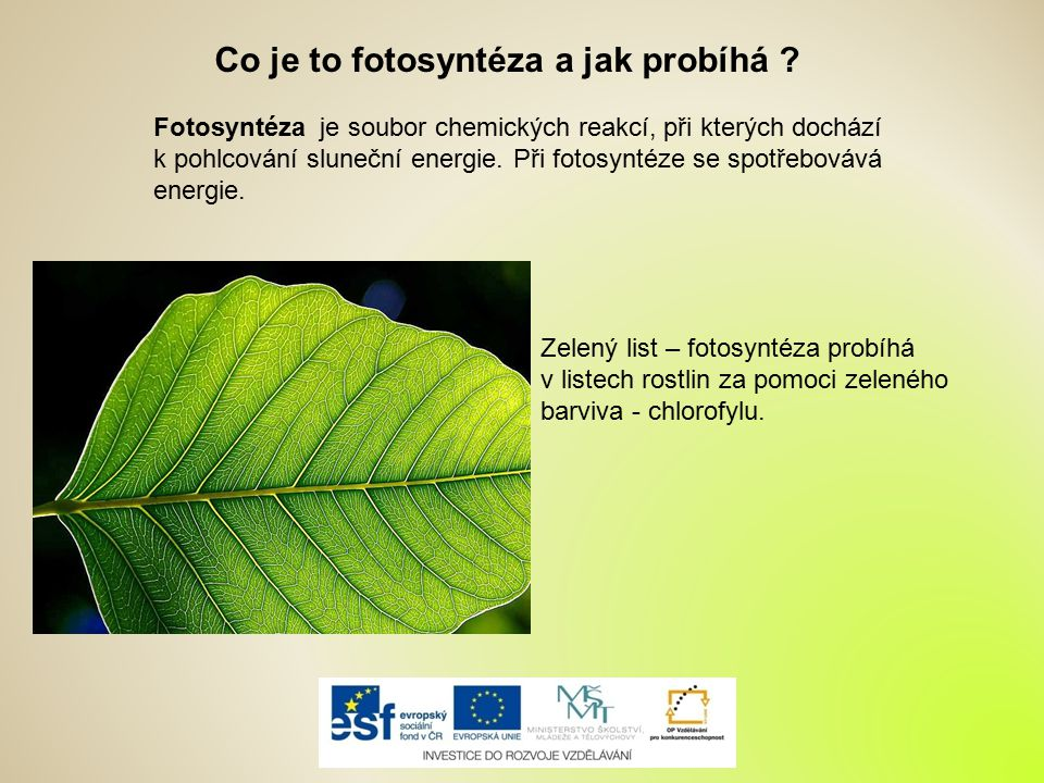 Co je to fotosyntéza a jak probíhá