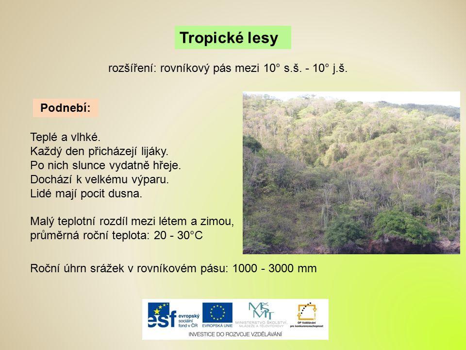 Tropické lesy rozšíření: rovníkový pás mezi 10° s.š. - 10° j.š.