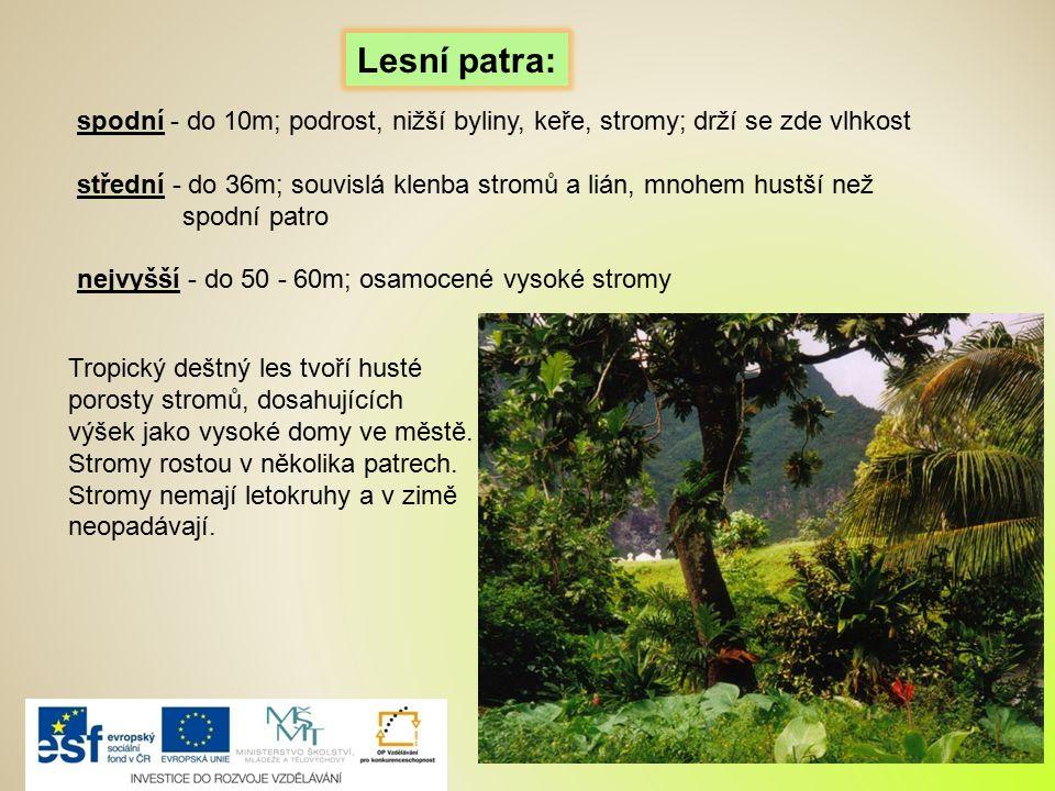 Lesní patra: spodní - do 10m; podrost, nižší byliny, keře, stromy; drží se zde vlhkost.